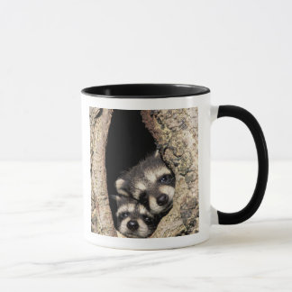 Baby raccoons in tree cavity Procyon Mug