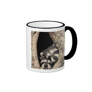 Baby raccoons in tree cavity Procyon Ringer Mug