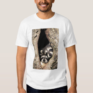 Baby raccoons in tree cavity Procyon T Shirts