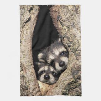 Baby raccoons in tree cavity Procyon Tea Towel