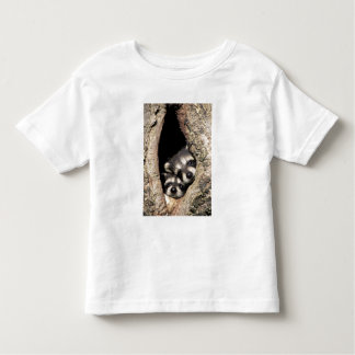 Baby raccoons in tree cavity Procyon T-shirt