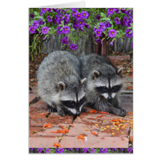 Baby Raccoons With Purple Flowers Card