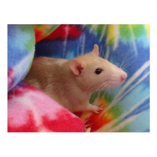 Baby Rat Postcard