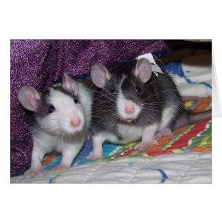 Baby Rats ~Card Card