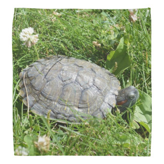 Baby Red Eared Slider Turtle Bandannas