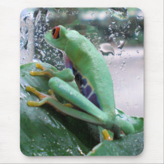 Baby Red Eyed Tree Frog Mouse Pad