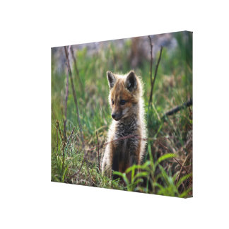 Baby Red Fox Outside Of Den Canvas Print