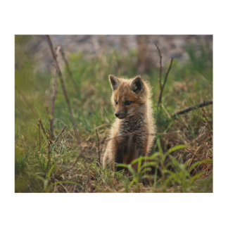 Baby Red Fox Outside Of Den Wood Wall Art