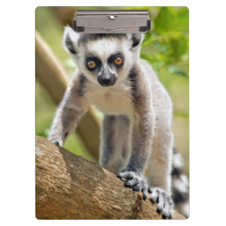 Baby ring-tailed lemur clipboard