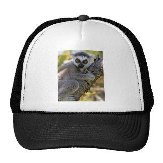 Baby Ring Tailed Lemur Mesh Hat