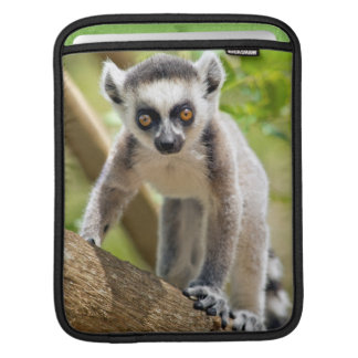 Baby ring-tailed lemur iPad sleeve