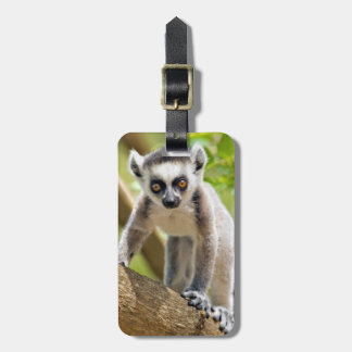 Baby ring-tailed lemur luggage tag