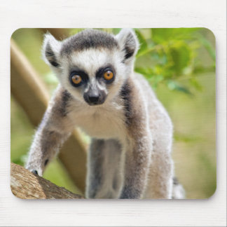 Baby ring-tailed lemur mouse pad