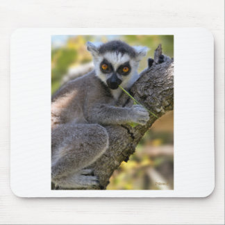 Baby Ring Tailed Lemur Mouse Pad