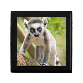 Baby ring-tailed lemur small square gift box