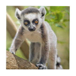 Baby ring-tailed lemur small square tile