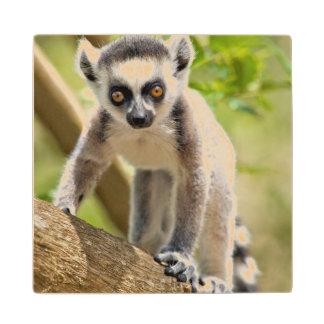 Baby ring-tailed lemur wood coaster