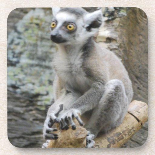 Baby Ringtailed Lemur Cork Coasters