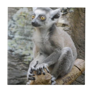 Baby Ringtailed Lemur Tile