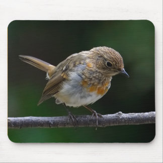 Baby Robin Mouspad Mouse Pad