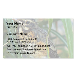 Baby Robin Pack Of Standard Business Cards