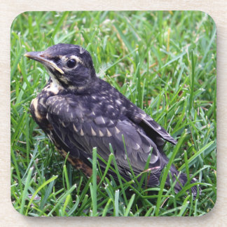 Baby Robin Sitting in the Grass Drink Coasters