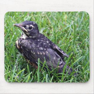 Baby Robin Sitting in the Grass Photo Mouse Mat