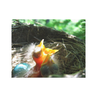 Baby Robins in a Nest Canvas Print