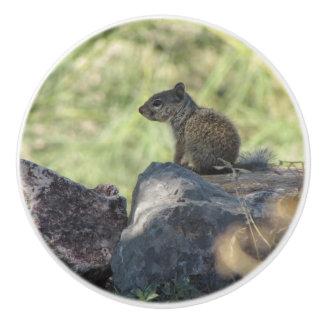 Baby Rock Squirrel Ceramic Knob