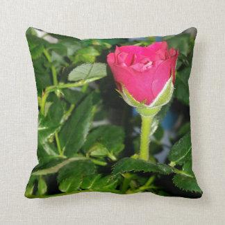 Baby rose cushion