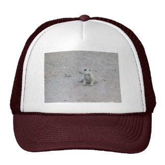 Baby Round-tail Ground Squirrel Trucker Hat