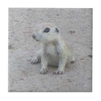 Baby Round-tail Ground Squirrel Tile