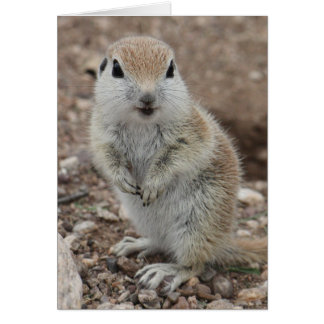 Baby Round Tailed Ground Squirrel Greeting Card