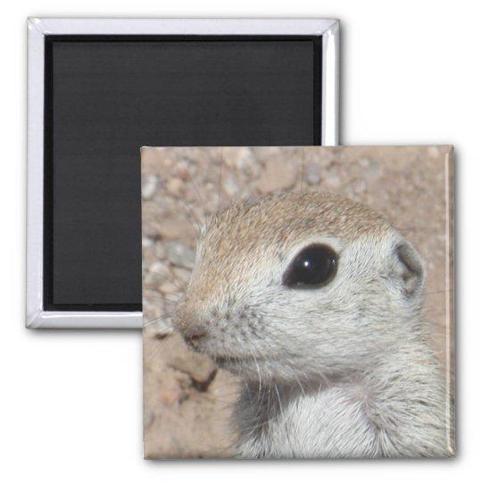 Baby Round-tailed Ground Squirrel Magnet