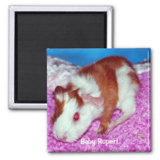 Baby Rupert Square Magnet