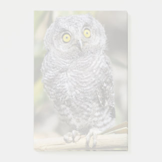 Baby Screetch-Owl Post-it Notes