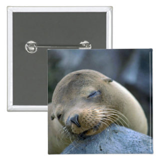 Baby sea lion, Galapagos Islands 15 Cm Square Badge