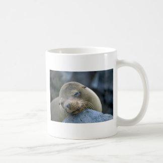 Baby sea lion, Galapagos Islands Mugs