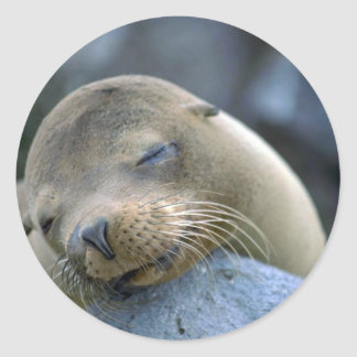 Baby sea lion, Galapagos Islands Round Sticker