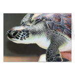 Baby Sea Turtle Blank Card