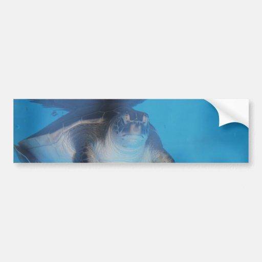 Baby Sea Turtle Bumper Sticker