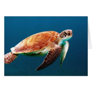 BABY SEA TURTLE CARD