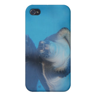 Baby Sea Turtle iPhone Case iPhone 4 Cases