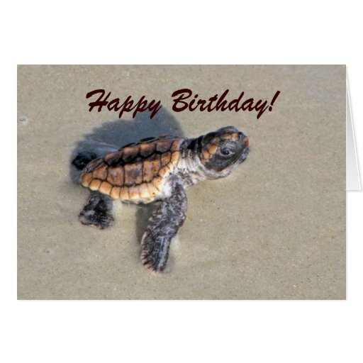 Baby Sea Turtle, Just Hatched Greeting Cards