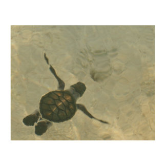 Baby Sea Turtle Swimming Out To Sea Wood Print