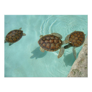 Baby sea turtles posters