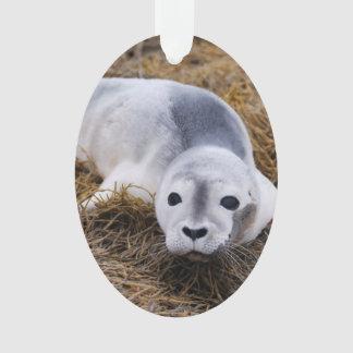 baby-seal-8.jpg