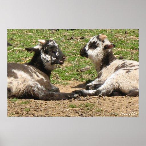 Baby Sheep Mount Vernon Estate April 2007 Poster