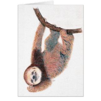 Baby sloth grooming itself greeting card