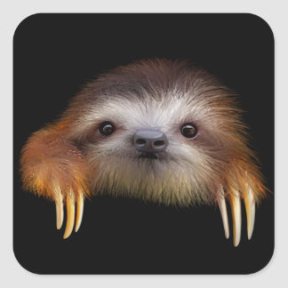 Baby Sloth Square Sticker